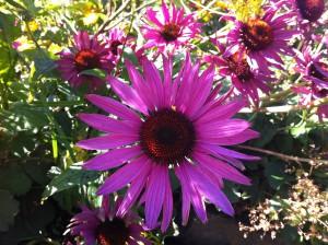 Blumen im Botanischen Garten der Christian-Albrechts-Universität zu Kiel