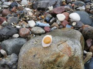 Bunte Steine an der Ostsee - Sieht aus wie ein Spiegelei
