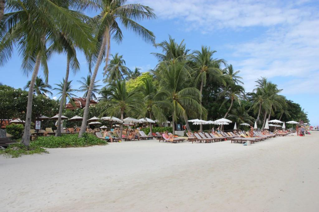Palmenstrand Chaweng Beach Koh Samui