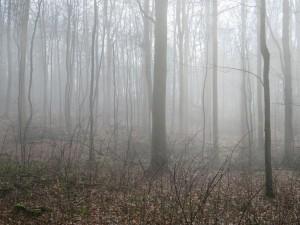 Dänisch-Nienhof Nebel Wald