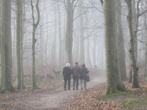 Dänisch-Nienhof Wald Steilküste