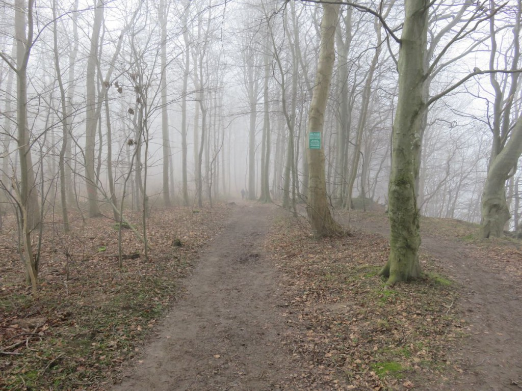 Nebel im Wald in Dänisch-Nienhof an der Steilküste