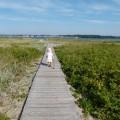 Falckensteiner Strand an der Kieler Förde