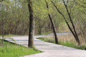 Weg im IGA Park Rostock