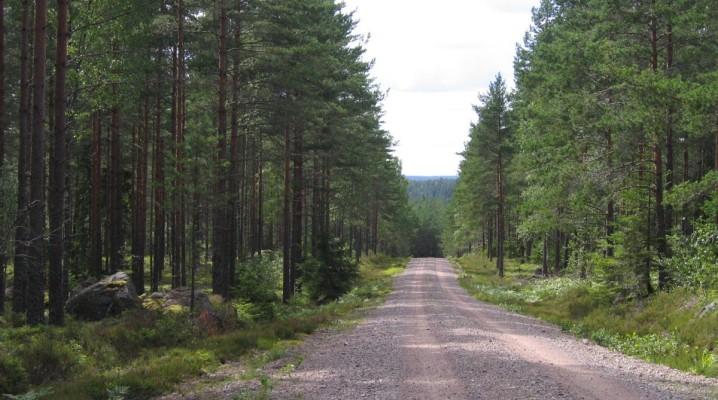 Nationalpark Norra Kvill Schweden
