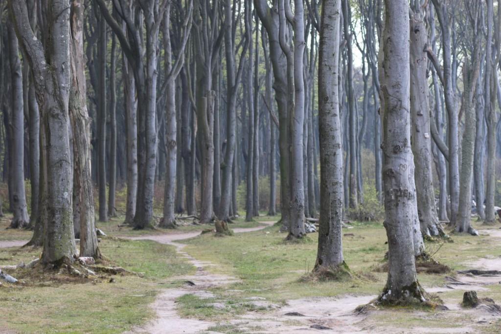 Nienhagen Gespensterwald