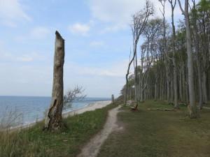 Ostseebad Nienhagen Gespensterwald