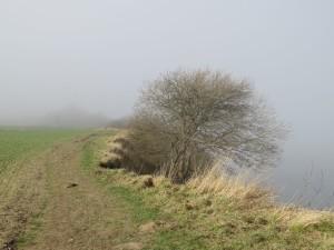 Steilküste bei Dänisch-Nienhof an der Ostsee bei Nebel