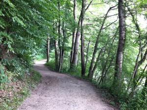 Rundwanderweg um den Ukleisee durch den Wald