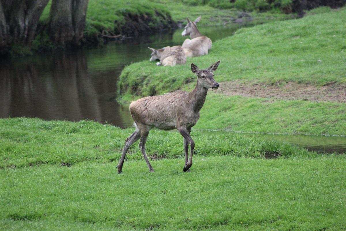 Eekholt Wildpark