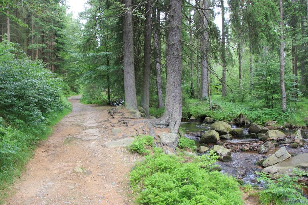 Waldweg vom Wurmberg nach Braunlage