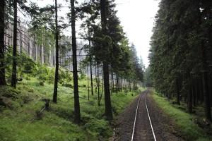 Bahngleis im Wald auf der Fahrt von Schierke zum Brocken mit der Brockenbahn