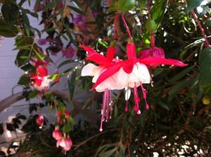 Blüten im Botanischen Garten der Christian-Albrechts-Universität zu Kiel