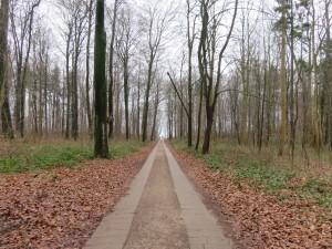 Dänisch-Nienhof Waldweg zum Strand