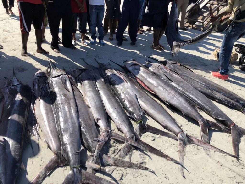 Fische Mzizma Fish Market Dar es Salaam