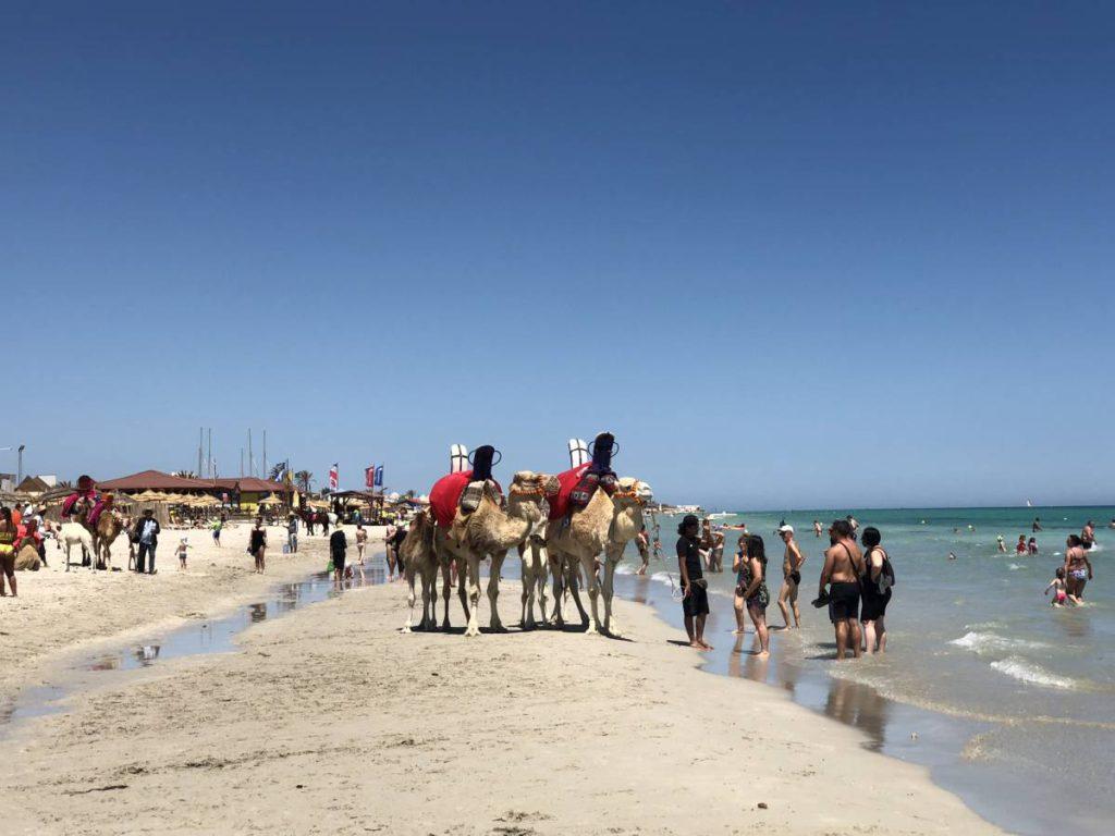Dromedare am Strand auf Djerba