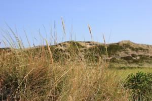 Dünen auf der Insel Sylt