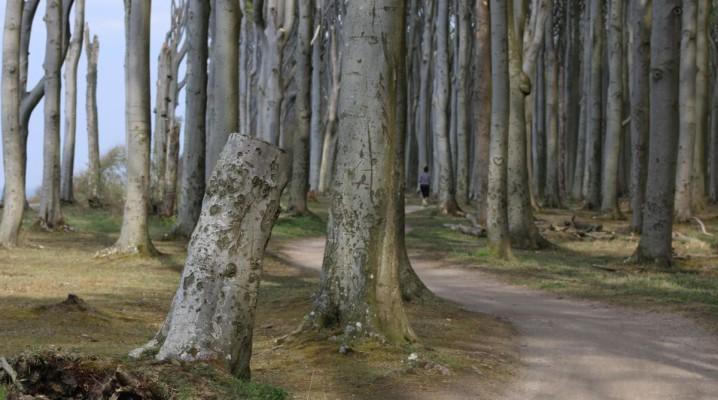 Waldweg im Gespensterwald