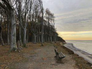 Nienhagen Gespensterwald Ostsee
