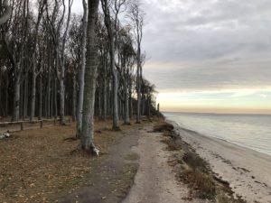 Gespensterwald & Ostsee Steilküste Nienhagen