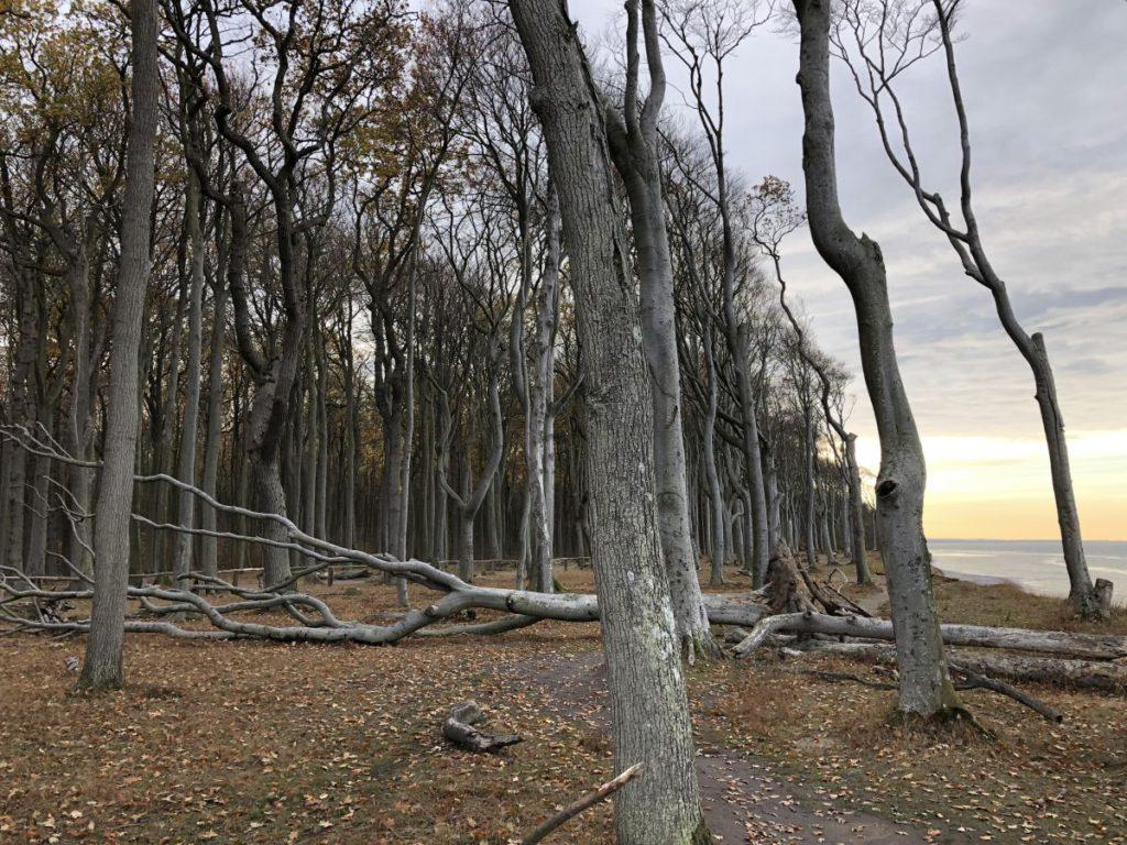 Bäume im Gespensterwald
