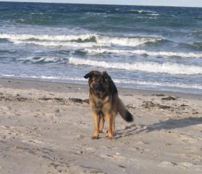 Mit dem Hund am Sehlendorfer Strand an der Ostsee