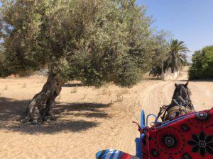 Kutschfahrt Djerba Tunesien