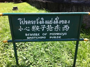 Hinweisschild in Lop Buri: Beware of monkeys snatching purse