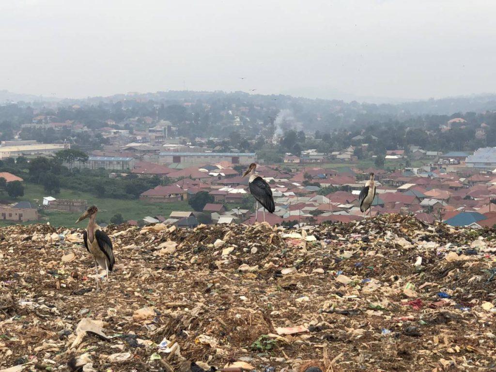 Tiere Kampala Mülldeponie Kiteezi Landfill