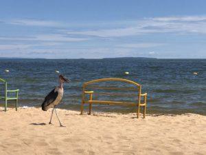 Marabu am Victoriasee Spennah Beach Uganda
