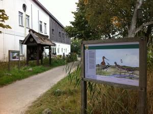 Informationstafel im NABU Wasservogelreservat Wallnau auf Fehmarn in Schleswig-Holstein