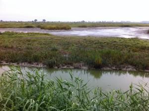Brutinseln im NABU Wasservogelreservat Wallnau auf Fehmarn in Schleswig-Holstein