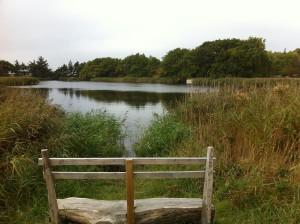 Teich im NABU Wasservogelreservat Wallnau auf Fehmarn in Schleswig-Holstein