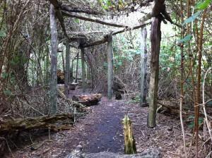 Fuchspfad im NABU Wasservogelreservat Wallnau auf Fehmarn