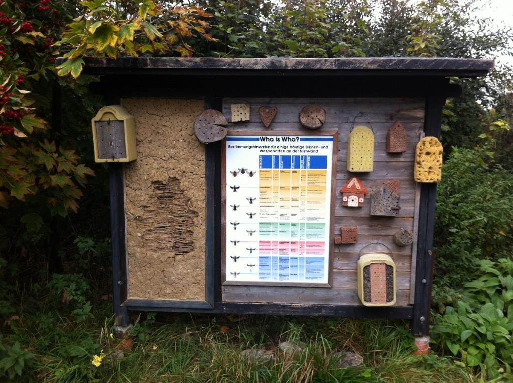 Schautafel Bestimmungshinweise Bienen- und Wespenarten im NABU Wasservogelreservat Wallnau auf Fehmarn