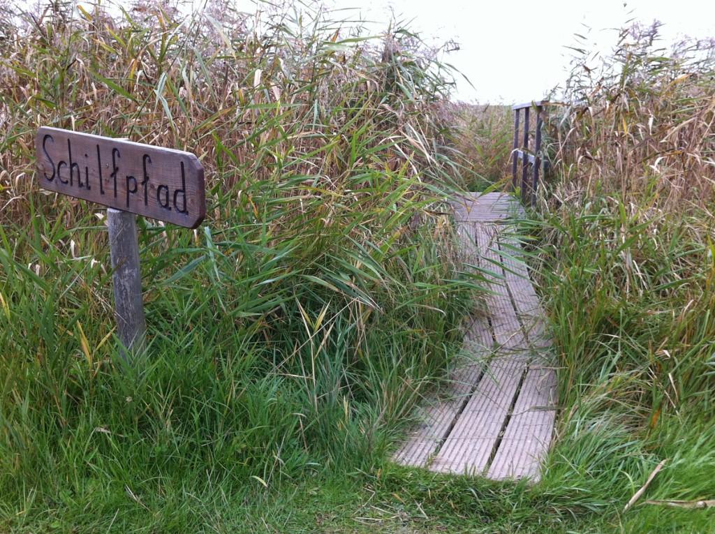 Schilfpfad im NABU Wasservogelreservat Wallnau auf Fehmarn