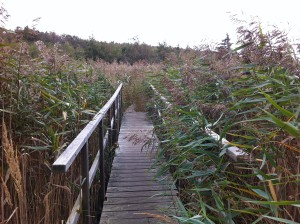 Brücke auf dem Schilfpfad im NABU Wasservogelreservat Wallnau auf Fehmarn