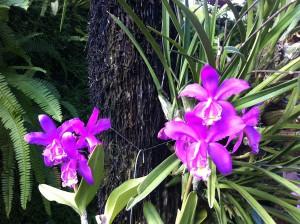 7. Internationale Kieler Orchideenschau im Botanischen Garten der Christian-Albrechts-Universität zu Kiel