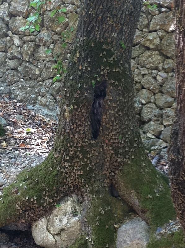 Schmetterlingstal auf Rhodos