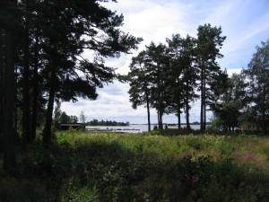 Wald in Schweden