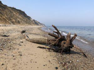 Stohl Ostsee Steilküste Baumstumpf an Strand