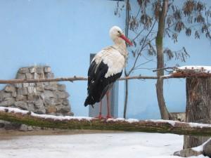 Storch im Breslauer Zoo