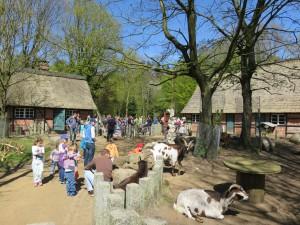 Streichelgehege Tierpark Neumünster