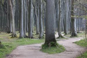 Waldweg durch den Gespensterwald