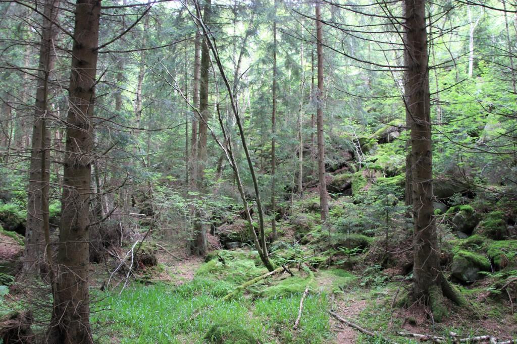 Wald am Bahnhof von Schierke im Harz