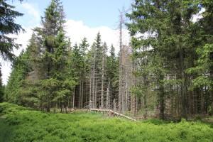 Wald am Wurmberg
