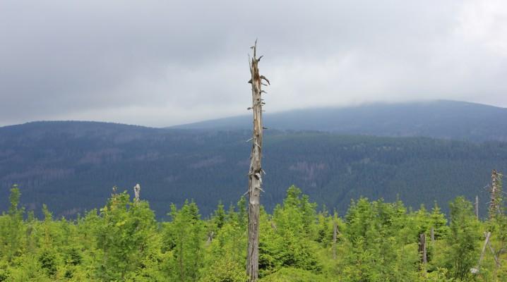 Wurmbergspitze mit Blick Ricktung Brocken