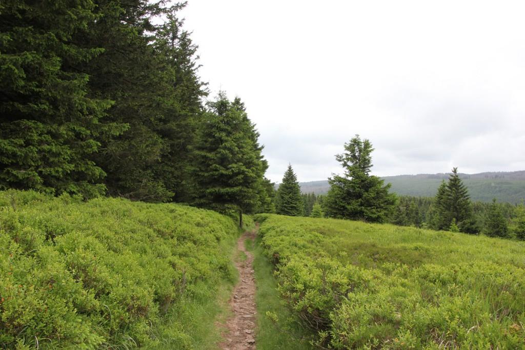 Wald und Wiese auf dem Weg vom Wurmberg nach Braunlage